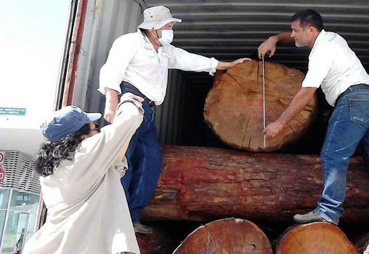 Imagen de los inspectores al momento de asegurar un total de 150.28 metros cúbicos de madera en rollo de distintas especies. (@PROFEPA_Mx)