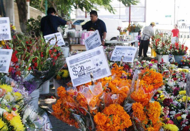 La Profeco se mantiene alerta ante la probabilidad de que el precio de la flor de cempasúchil se incremente. (Octavio Martínez/SIPSE)