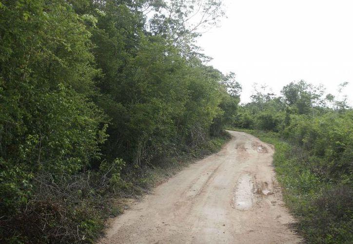 En Quintana Roo existen 282 ejidos que poseen el 52.66% del total de la superficie territorial. (Harold Alcocer/SIPSE)