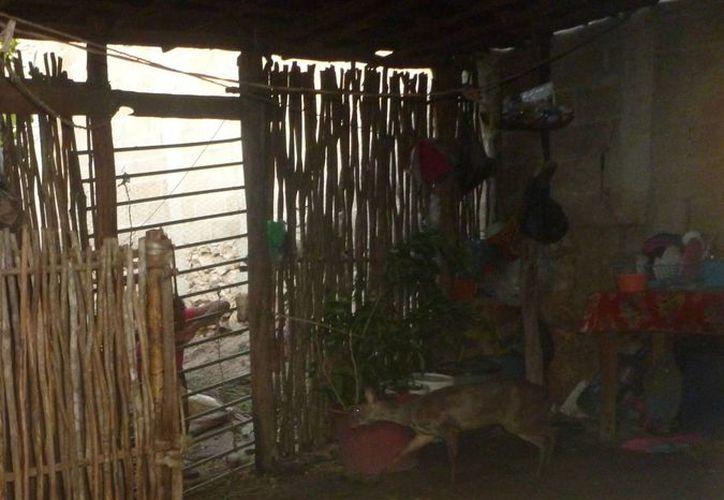 El venado rescatado por la Profepa en Peto estaba encerrado en un espacio delimitado con maderas artesanales. (SIPSE)