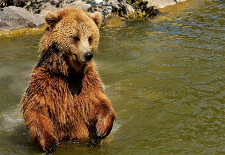 El oso logró colocar un mejor ángulo al original. (Pixabay)
