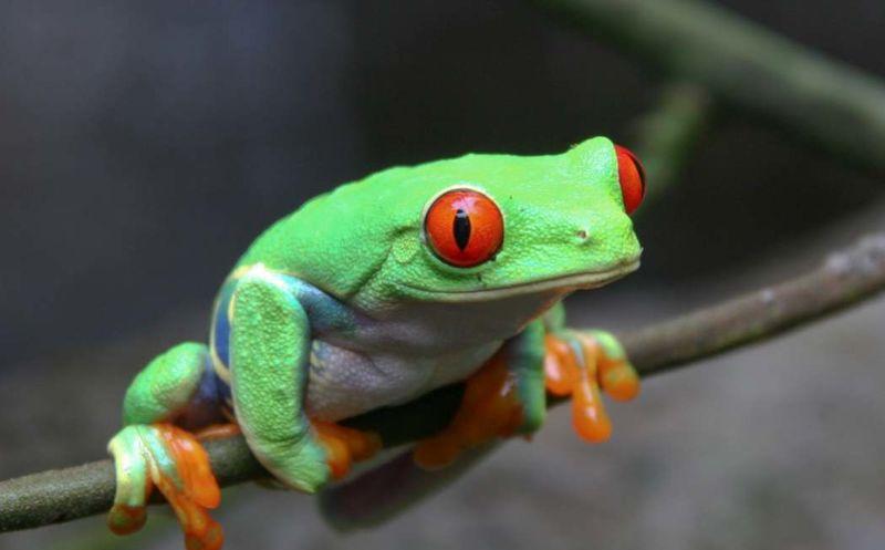 Hombre encuentra rana gigantesca y la bautizan 'Frogzilla — Facebook