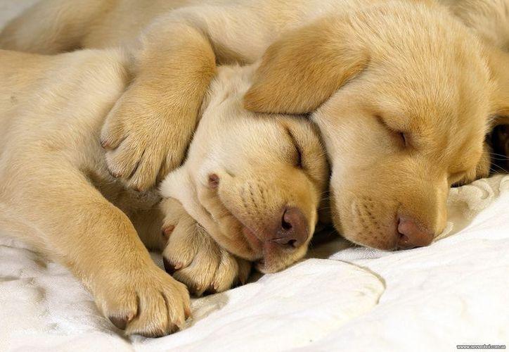 Los detalles de los sueños de los perros siguen siendo elusivos. (Contexto/Internet).