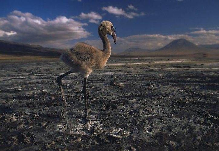 Pocas especies se han adaptado a las características del lago. (dailymail.co.uk)
