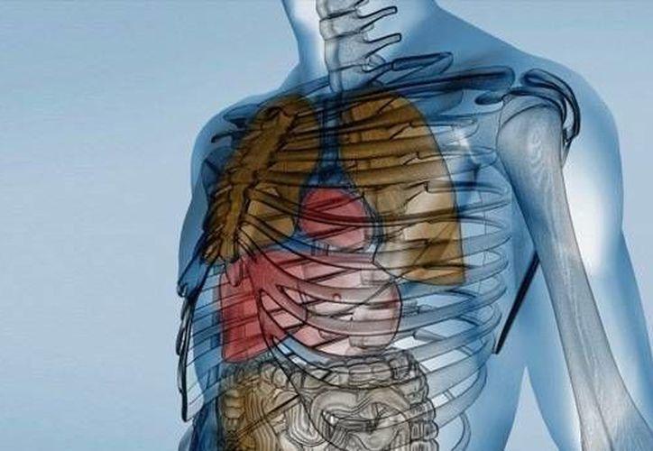 El análisis mostró que ni la estructura celular ni la forma de las muestras resultaron dañadas. (actualidad.rt.com)