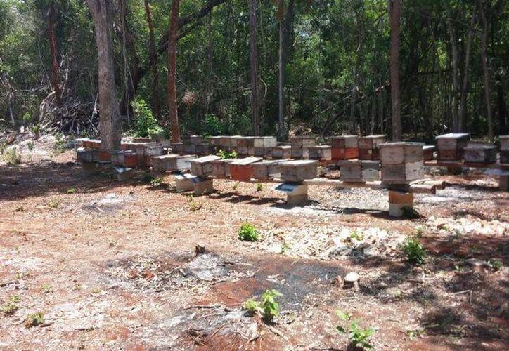 Con el fin de proteger la actividad apícola, está prohibido introducir a la entidad equipo usado. (Gerardo Amaro/SIPSE)