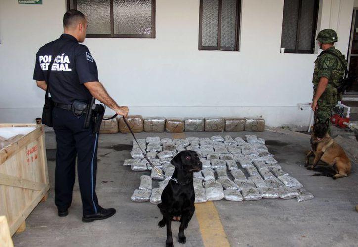 En un operativo realizado en una empresa de paquetería en Ciudad Industrial, autoridades hallaron, con ayuda de perros especiales, 86 kilos de marihuana. (J. Pallota/Milenio Novedades)