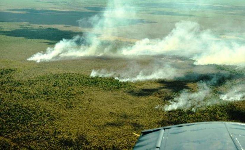 En Quintana Roo se registró una afectación de cinco mil 957.98 hectáreas. (Archivo/SIPSE)