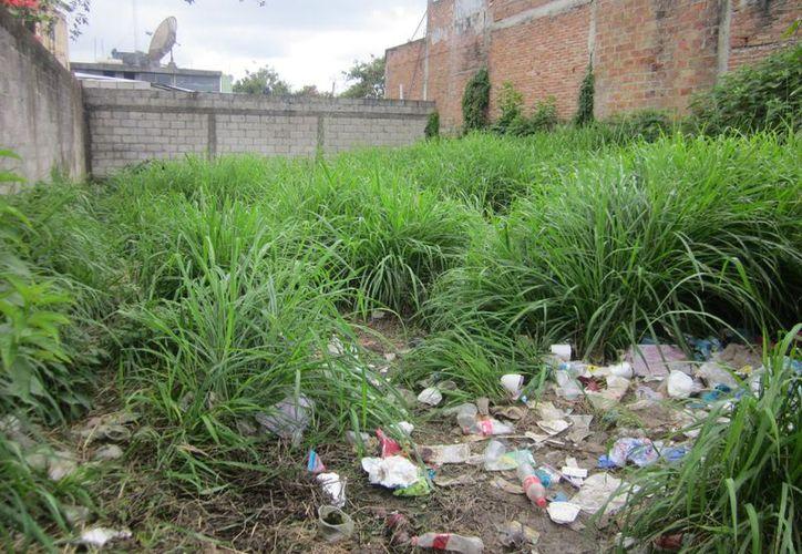 Habitantes señalan que en las colonias como Nuevo Progreso se pueden ver una infinidad de lotes baldíos con basura. (Carlos Castillo/SIPSE)