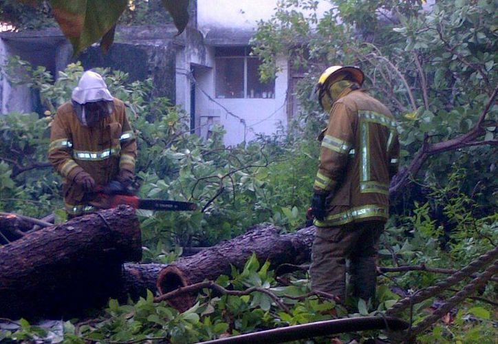 Los bomberos mitigaron el ataque de las abejas con agua jabonosa. (Redacción/SIPSE)