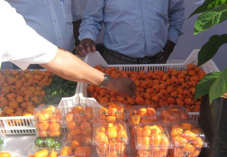 El chile habanero es producido en el estado. (Benjamín Pat/SIPSE)