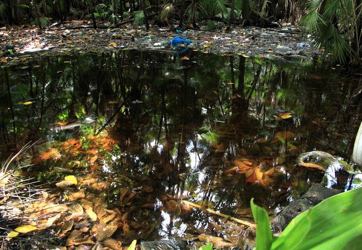 Pese a que la gente arroja basura en los cuerpos de agua, éstos ayudan a que los árboles estén en buenas condiciones, de acuerdo con el estudio del Centro de Investigación de Ciencias de Yucatán. (Paola Chiomante/SIPSE)