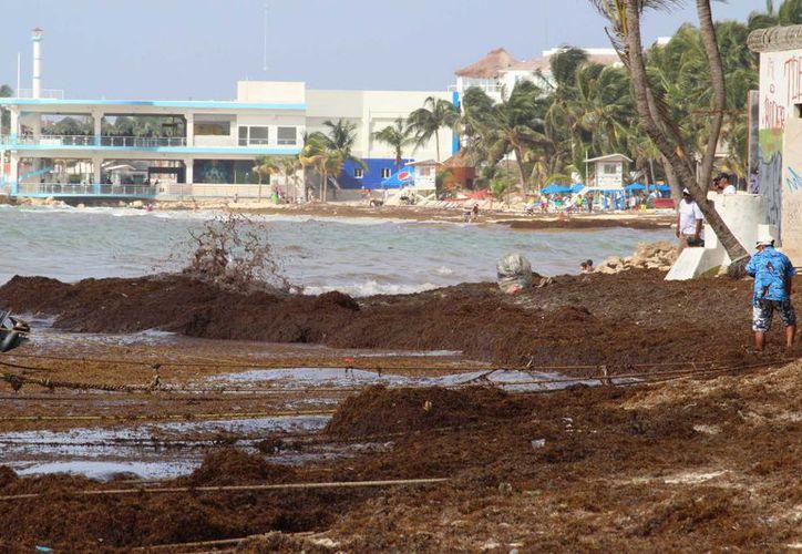 La mañana de este miércoles, la presencia de las algas marinas inhibió la actividad turística. (Adrián Barreto/SIPSE)