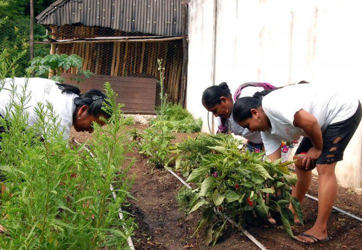 Las familias desarrollarán cultivos orgánicos. (Milenio Novedades)