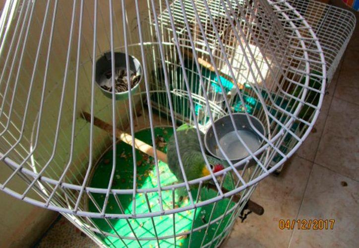 Un hombre pasará dos años en prisión tras ser inculpado de comercializar aves en la vía pública, en Nuevo León. (Proceso)