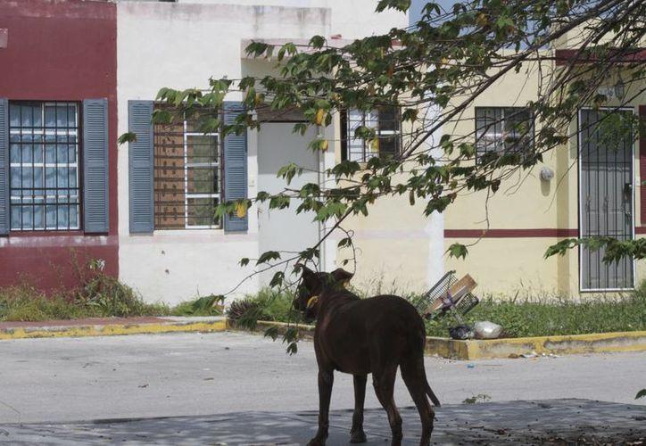 Los habitantes de los fraccionamientos ya están acostumbrados a convivir con los perros callejeros. (Tomás Álvarez/SIPSE)