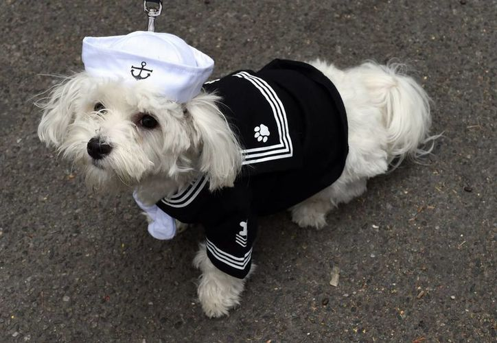 En el concurso sólo podrán participar perros, y podrás disfrazarlos de lo que quieras. (Foto: Contexto/Internet)