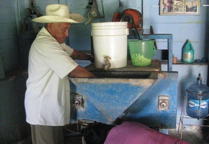 Exhortan a la ciudadanía a comprar el producto directamente en las tortillerías. (Foto: Javier Ortiz/SIPSE)