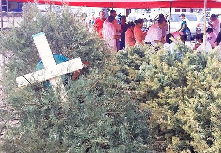 Las autoridades mexicanas frenaron la entrada de mil 440 árboles de Navidad porque contenían plagas de insectos. La imagen de archivo. (SIPSE)