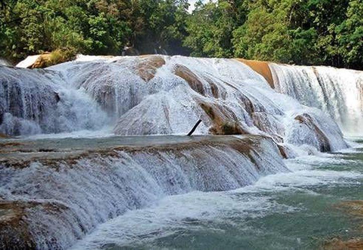 Mundo Joven agrega que en este paseo se podrán visitar las Cascadas de Agua Azul, la cascada Misol-Ha y las del Chifón. (mundojoven.com)