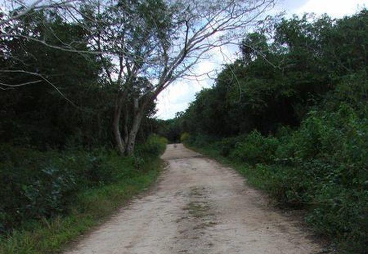 Los caminos y veredas por los que llegan a las parcelas se encuentran totalmente transitables. (Manuel Salazar/SIPSE)