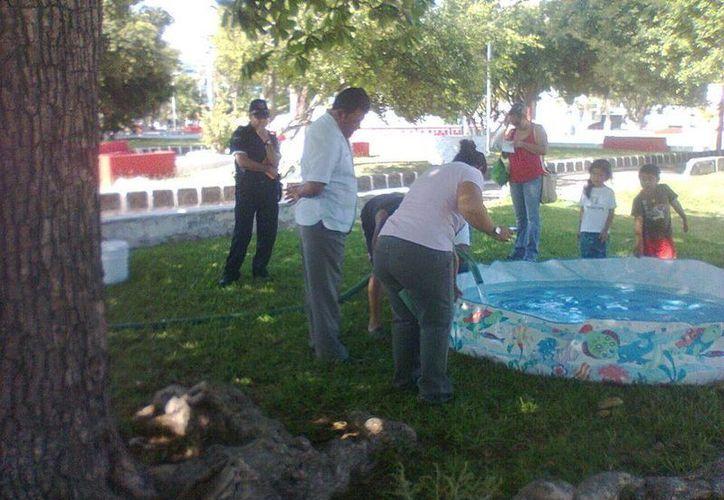 En el lugar también se realizan actividades recreativas para sus hijos y los visitantes. (Redacción/SIPSE)