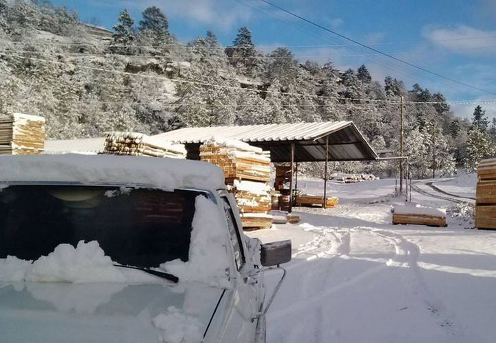 Se han registrado nevadas de hasta 25 centímetros de grosor. (Archivo/Notimex)