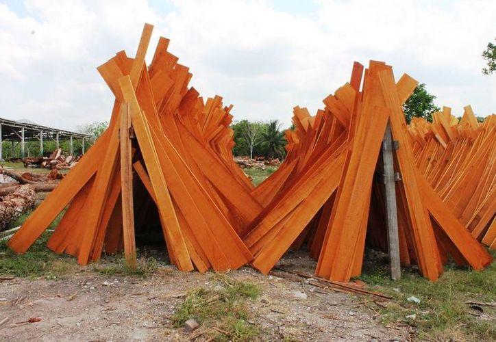 Las maderas duras tropicales tienen poco mercado a nivel local y la exportación se ha vuelto más difícil. (Edgardo Rodríguez/SIPSE)