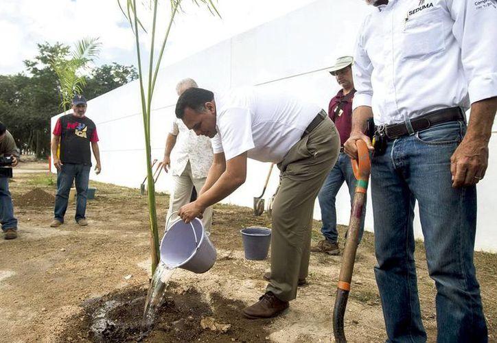 El Gobernador sembró una palma real para la reforestación a un lado del Centro de Espectáculos Montejo, en las instalaciones de la Feria Yucatán Xmatkuil. (Milenio Novedades)
