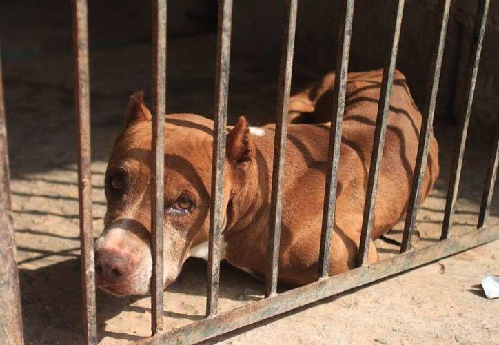 Los dueños de perros callejeros pueden ser sancionados con hasta 100 salarios mínimos. (Foto: Eddy Bonilla)