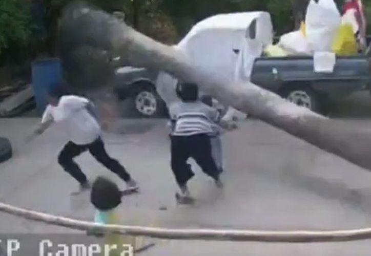 Bastaron centímetros para que el pequeño hubiera sido aplastado por la gran palmera. (Foto: Captura de pantalla).