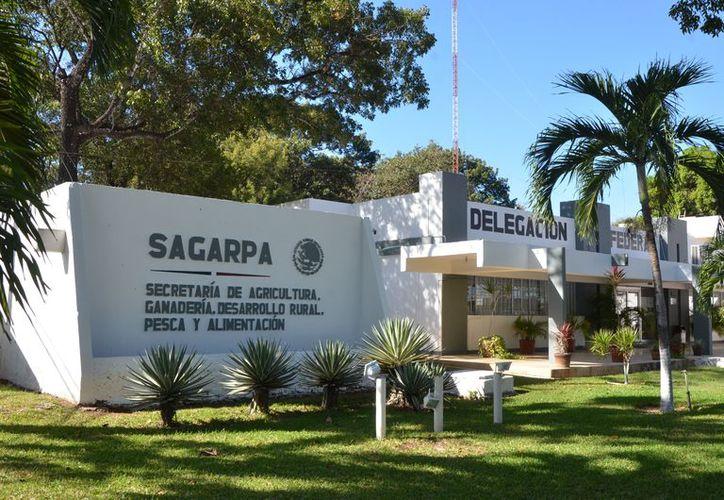 En el 2017, en el período Primavera Verano fueron liberados 74 millones 549 mil 580.20 pesos par Quintana Roo. (Joel Zamora/SIPSE)
