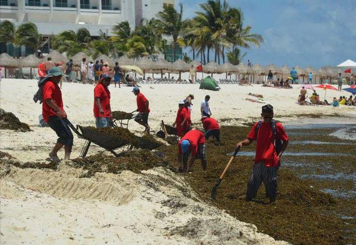 Durante las dos últimas semanas el municipio de Solidaridad ha reforzado la limpieza de las playas. (Foto de contexto/Internet)
