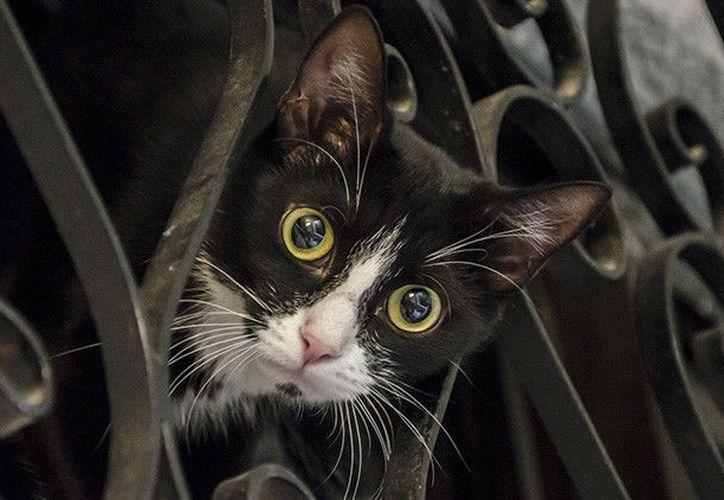 Todos los felinos fallecieron intoxicados a lo largo del mes pasado. (RT)