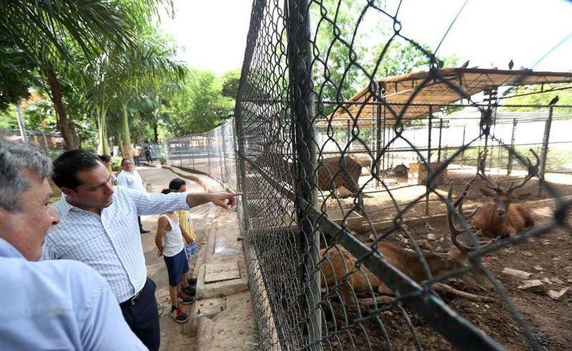 El alcalde Mauricio Vila Dosal realizó ayer una visita al Parque Recreativo 'Manuel Berzunza Carrillo', conocido como  zoológico de la Mulsay, donde hizo entrega de las obras de ampliación. (Milenio Novedades)