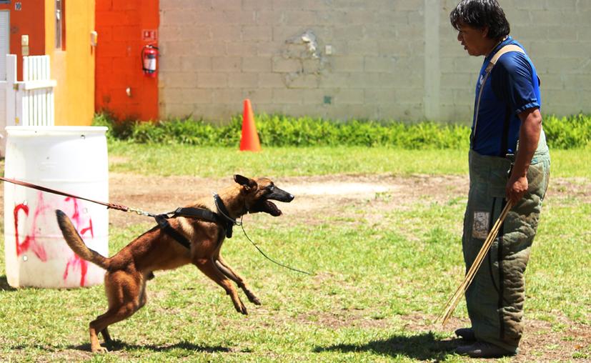 Durante los tres días de capacitación, los participantes y sus mascotas trabajarán con Paulo César Lara Rico, quien hace adiestramiento canino a nivel nacional e internacional. (Octavio Martínez/SIPSE)