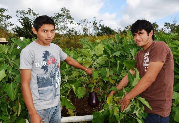 Ricardo Alberto Espinoza y Vauny Casanova abastecen a través de 'Patio Orgánico' de hortalizas a la Riviera Maya. (Edgardo Rodríguez/SIPSE)