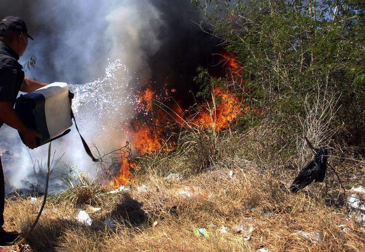 Se han controlado los incendios forestales que se han producido sin que se registren pérdidas humanas. (Milenio Novedades)
