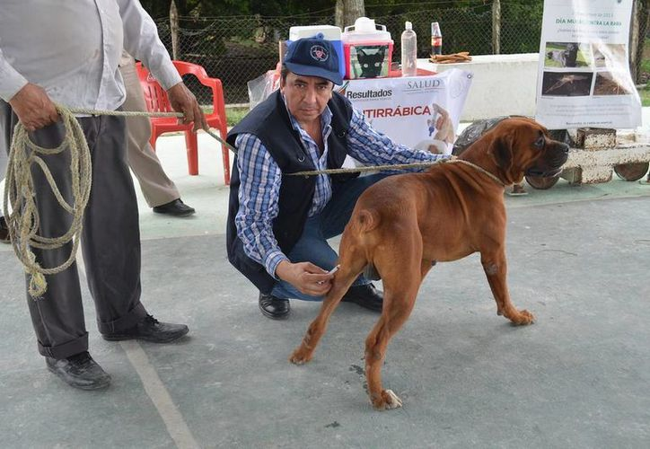 Intensifican las acciones contra el dengue y vacunan a las mascotas en los operativos. (Redacción/SIPSE)
