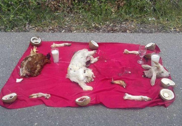 'Altar satánico' que fue encontrado en plena carretera de Progreso y que resultó ser falso. (Jorge Moreno/Milenio Novedades)