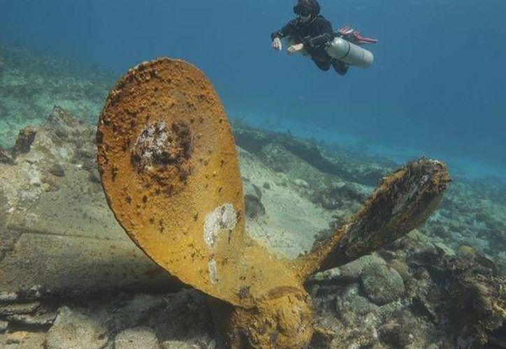 Siendo un destino con gran belleza natural, año con año se va incrementado la popularidad del arrecife de Banco Chinchorro. (Harold Alcocer/SIPSE)