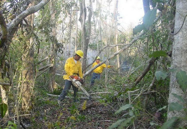 La Gerencia de la Comisión Nacional Forestal señaló que este año se destinan más de $50 millones para la reforestación (Joel Zamora/SIPSE)
