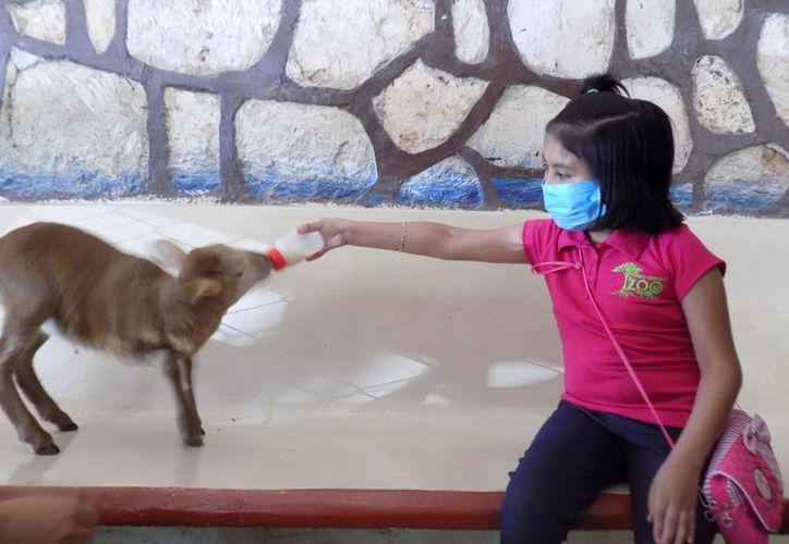 La niña fue nombrada miembro honorario de los cuidadores de fauna del Zoológico Payo Obispo. (Joel Zamora/SIPSE)