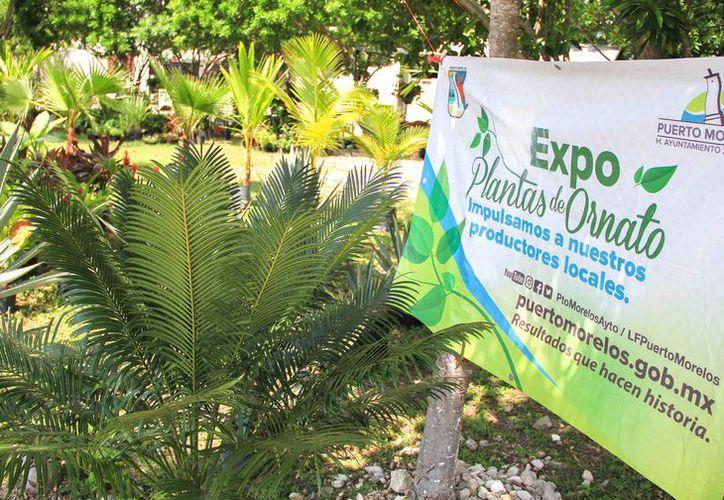 Se realiza en Puerto Morelos la segunda edición de la Expo Plantas de Ornato 2017. (Redacción/SIPSE).