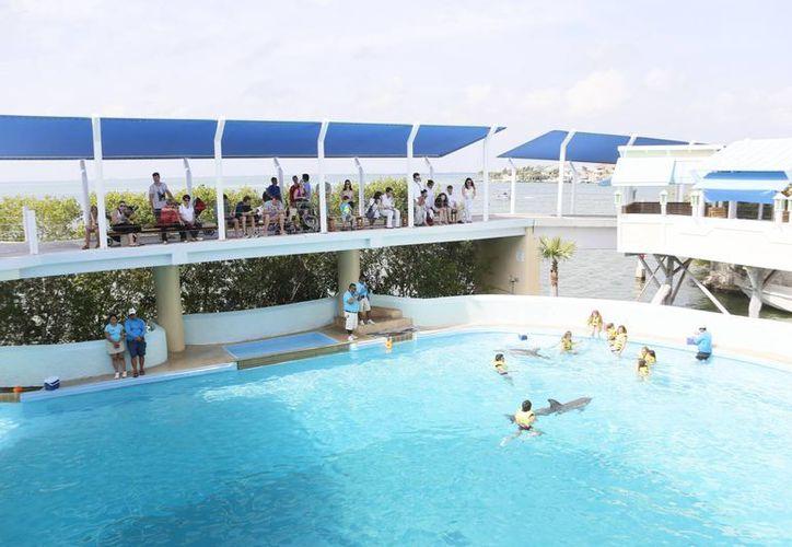 El festival se llevará a cabo el 8 de junio en el marco del Día Mundial del los Océanos. (Israel Leal/SIPSE)