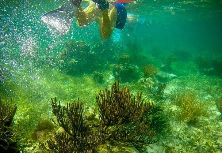 El arrecife de Puerto Morelos es uno de los tesoros más importantes que posee el Caribe mexicano. (Cortesía/Notimex)