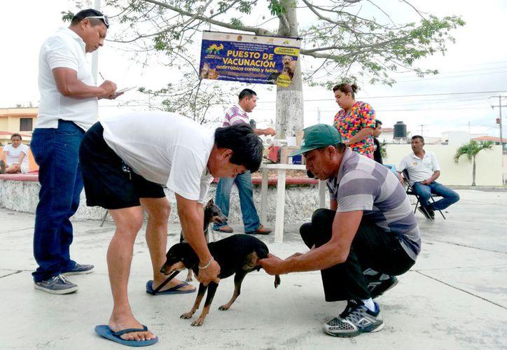 De lunes a viernes, los dueños pueden llevar a sus mascotas a las oficinas de la Jurisdicción Sanitaria 1 para que reciban la vacuna.  (Foto: David de la Fuente / SIPSE)