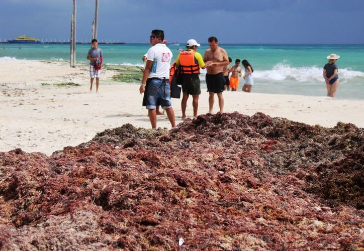 El sargazo en las playas de Playa del Carmen se ha acumulado porque los vehículos para retirarlo no tienen gasolina. (Octavio Martínez/SIPSE)