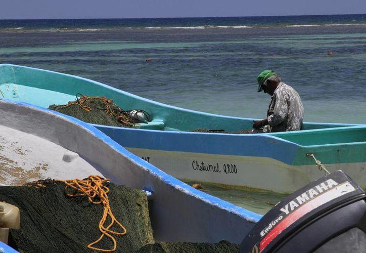 Algunas especies marinas comienzan a escasear en Q. Roo; se ha propuesto la acuicultura para mantenerlas. (Ángel Castilla/SIPSE)
