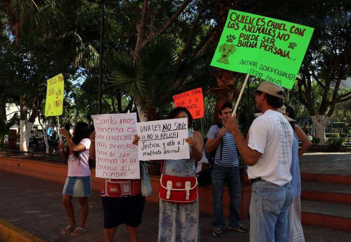 Un grupo de personas se manifestó este miércoles 11 de noviembre de 2015 frente al Ayuntamiento de Mérida para exigir justicia en el caso de los perros macheteados en el Fraccionamiento Juan PabloII-Nora Quintana. (José Acosta/SIPSE)